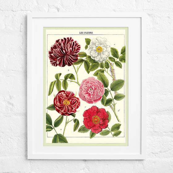 Framed flat paper showing Cavallini and Co's Les Fleurs design.